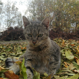 caturday autumn autumncolors garden leavesfall