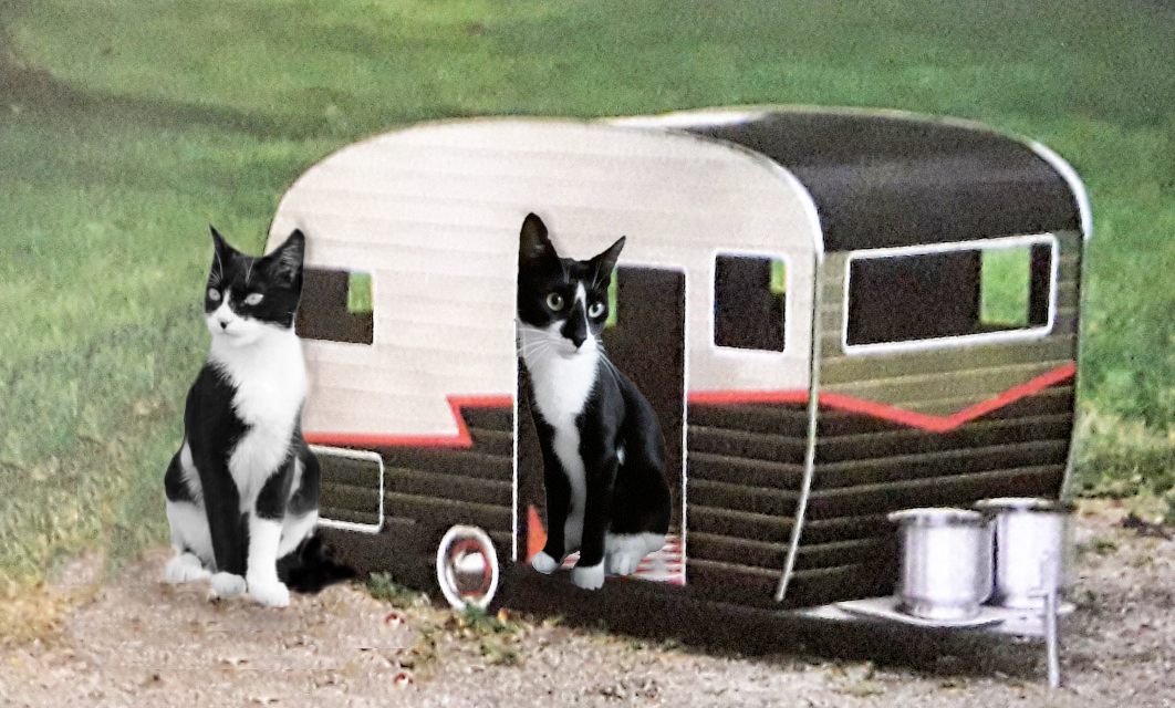 Sansa & Chica let's go camping!#myedit #creative #artistic #mypet #cute #catsofpicsart #funny