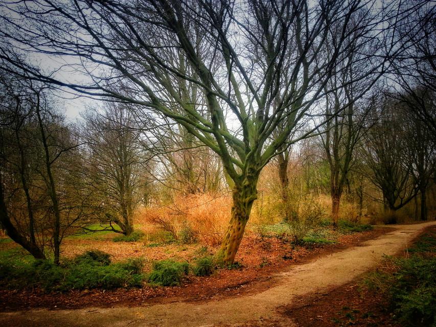 The Devil's Tree #autumnswag #nature #tree #grass #autumn #colorful #atmosphere #landscape