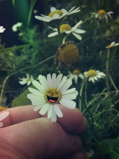 daisy stickers happiness emotions mygarden