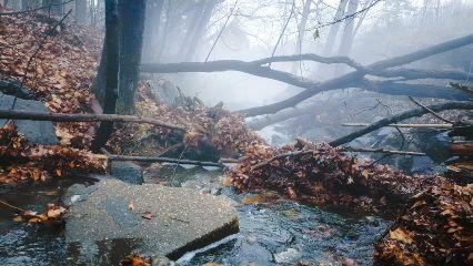 photography nature landsape autumn foggy_landscape