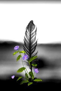freetoedit myedit madewithpicsart blackandwhite purple