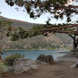 trees lake love travel