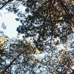 freetoedit trees forest greenlifeevents forestwalk