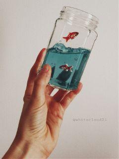 fish redfishes picsart madewithpicsart picsartstickers