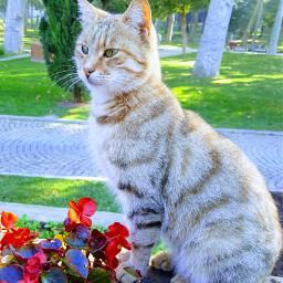 freetoedit cat catlover flower remixit