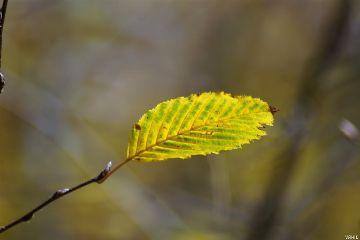 freetoedit closeup leaf nature photography