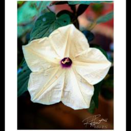 flower border white art plant