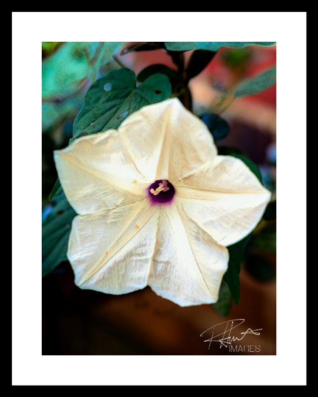 #flower #border #white #art #plant