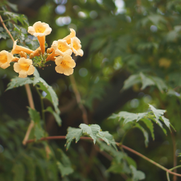 wildflowers yellowflower naturephotography