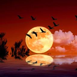 freetoedit dailyremix dailyremixmechallenge moon birds