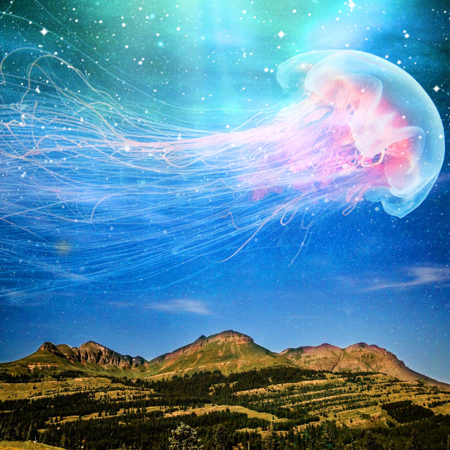 #mountains #sky #stars #nature #photography #ocean #doubleexposure #jelly #jellyfish #surreal #surrealism #blend #beautiful jellyfish found on Google