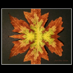 autumn otoño autumleaves hojasdeotoño nature