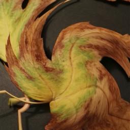 autumn otoño autumleaves hojasdeotoño nsture