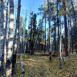 trees nature autumnleaves hikingtrail