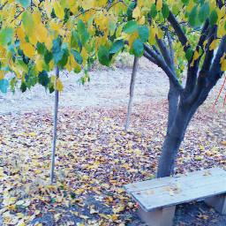 freetoedit bench tree