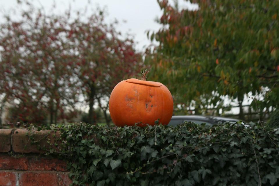 Spotted this pumpkin #pumpkin