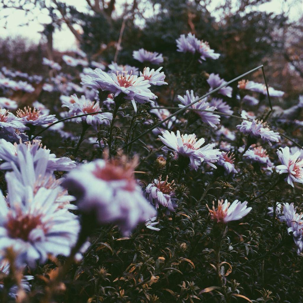 #autumn #summer #flowers #flower #dew #macro #macrophotography #iphone #iphonephotography #nature #rest #FreeToEdit