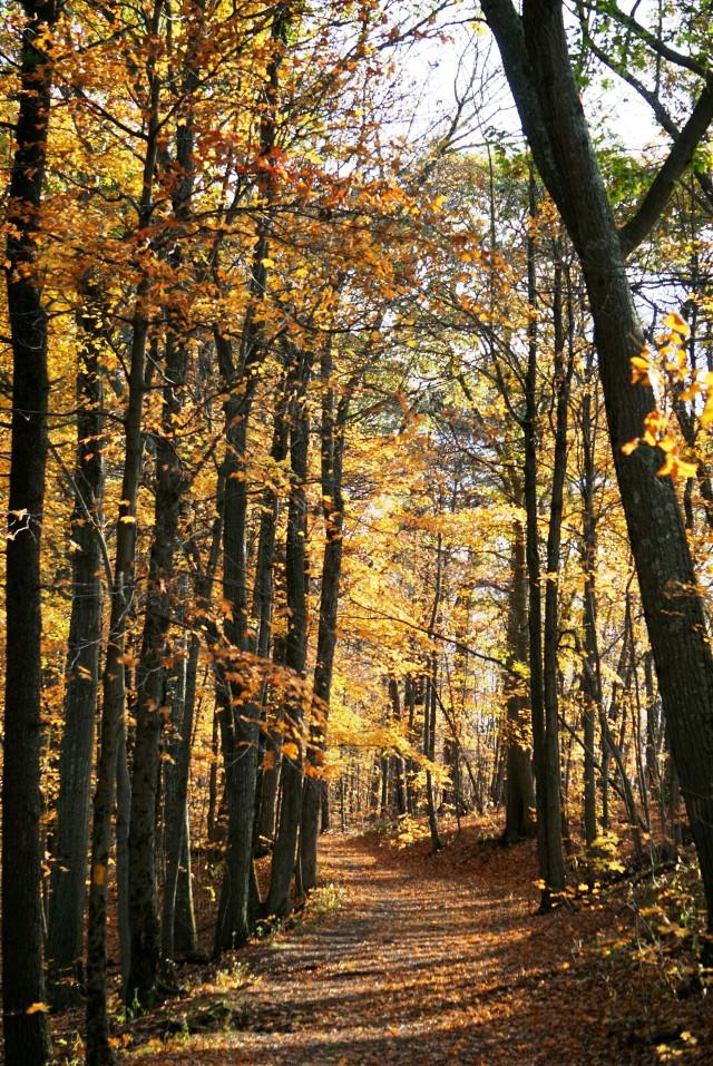 #nature #autumn
