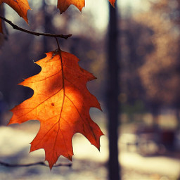 листик осень парк лист клен
