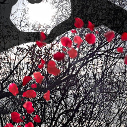 freetoedit remixmegallery loveheart throughthesun red