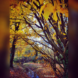 emotions naturephotography nature fotography autumncolors