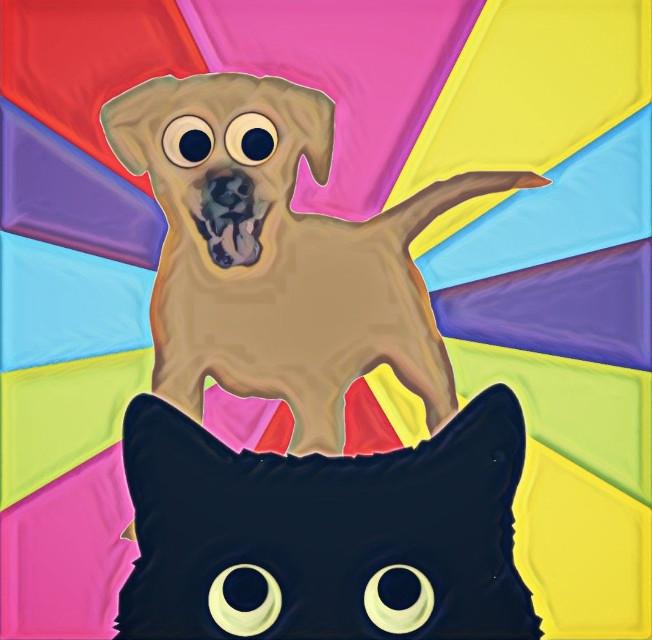 #funnypets #googlyeyes #dog #cat #cute