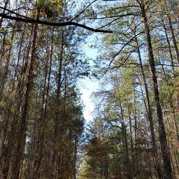 trees sycamore travel adventure