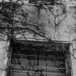 vines wall blackandwhite monochrome bnw