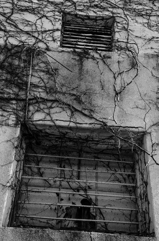 The Vines  #vines #wall #blackandwhite #monochrome #bnw #bnwphotography #black & white #monochromatic #grayscale