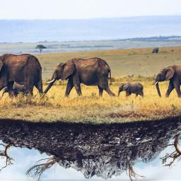 freetoedit elepant elefants elefantes elefante