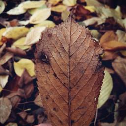 autumnvibes autumncolors autumnal leaf fallcolors