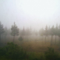 pcbadweather badweather southafrica africa savana pcwinterparks pcfoggy