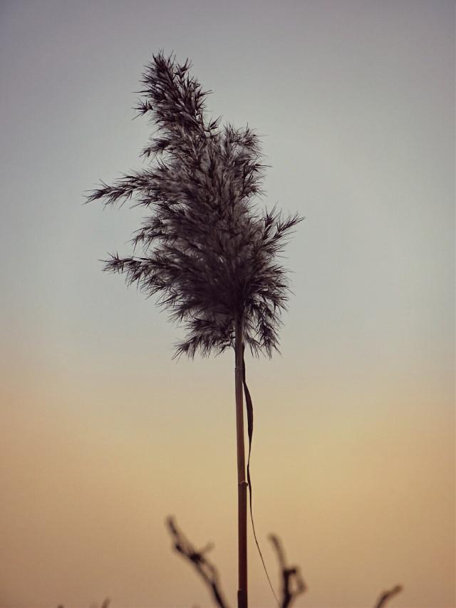 #fallminimalism #twilighteffect #pckeepitsimple #keepitsimple #minimalism #autumn