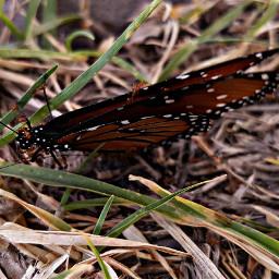 mariposa death naturephotography
