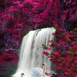 freetoedit reeditedgallery remixedgallery swans waterfalls