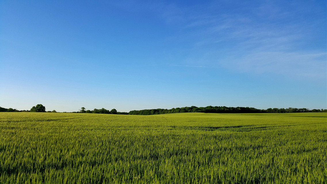 #field #green #farm #grass