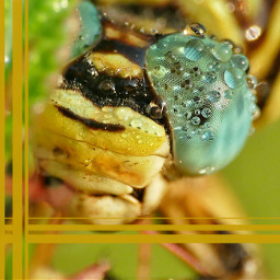 photography nature insects dragonfly macro