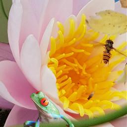 freetoedit nature animals bee rose