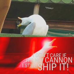 meme seagulmeme ships fanfiction