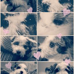 freetoedit buddy dog cutie cute