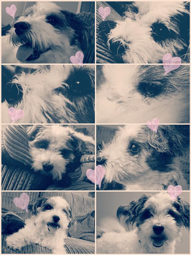 #buddy #dog #cutie #cute