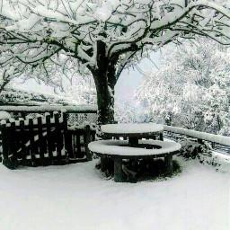 snow trees welcomewinter winterlove freetoedit
