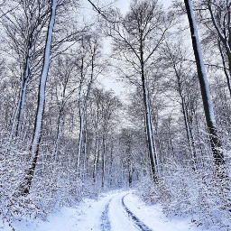 myphoto forest road snow winter freetoedit