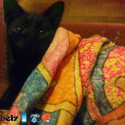 betzeditz cat blackcat cute cozyblanket