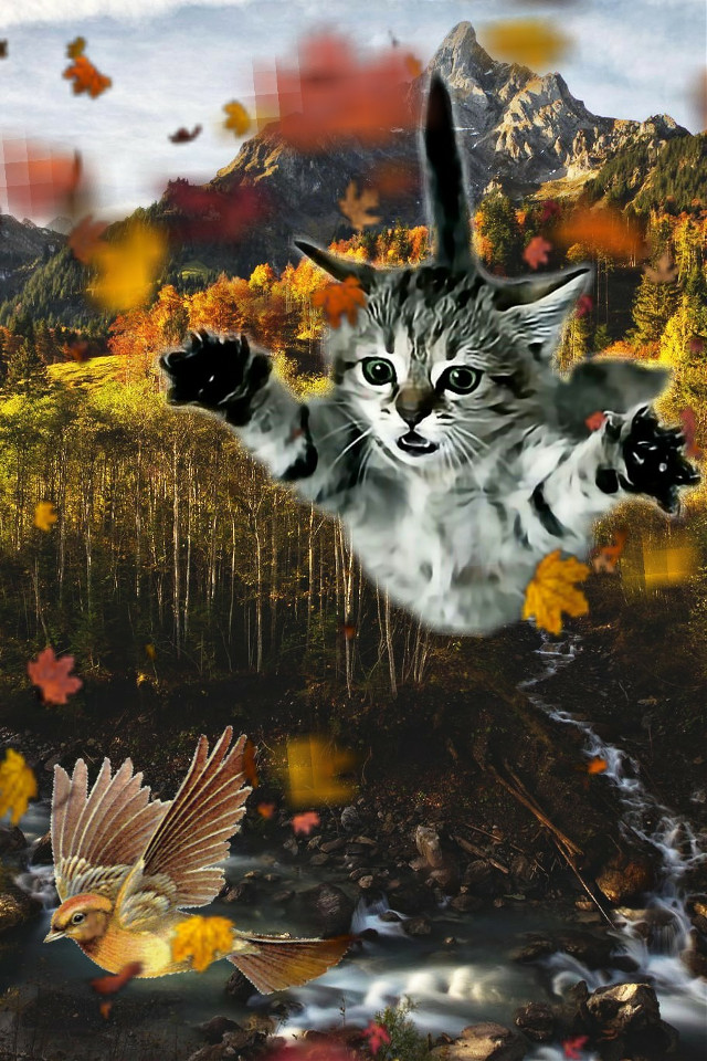 If you lose something, it is hidden nearby, if you gain something, it was there from the begin  #kitty #bird #flying #fall #forest #trippy#landscape#freetoedit