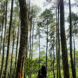 freetoedit forest nature photography picsart
