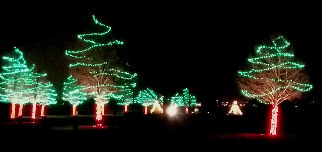 Christmas lights  #lights #christmaslights