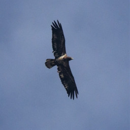 freetoedit nature photography birds hawk