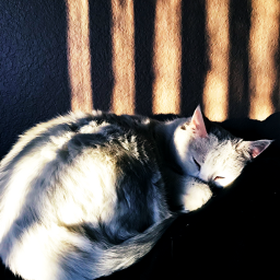 naptime lazycat japan ash